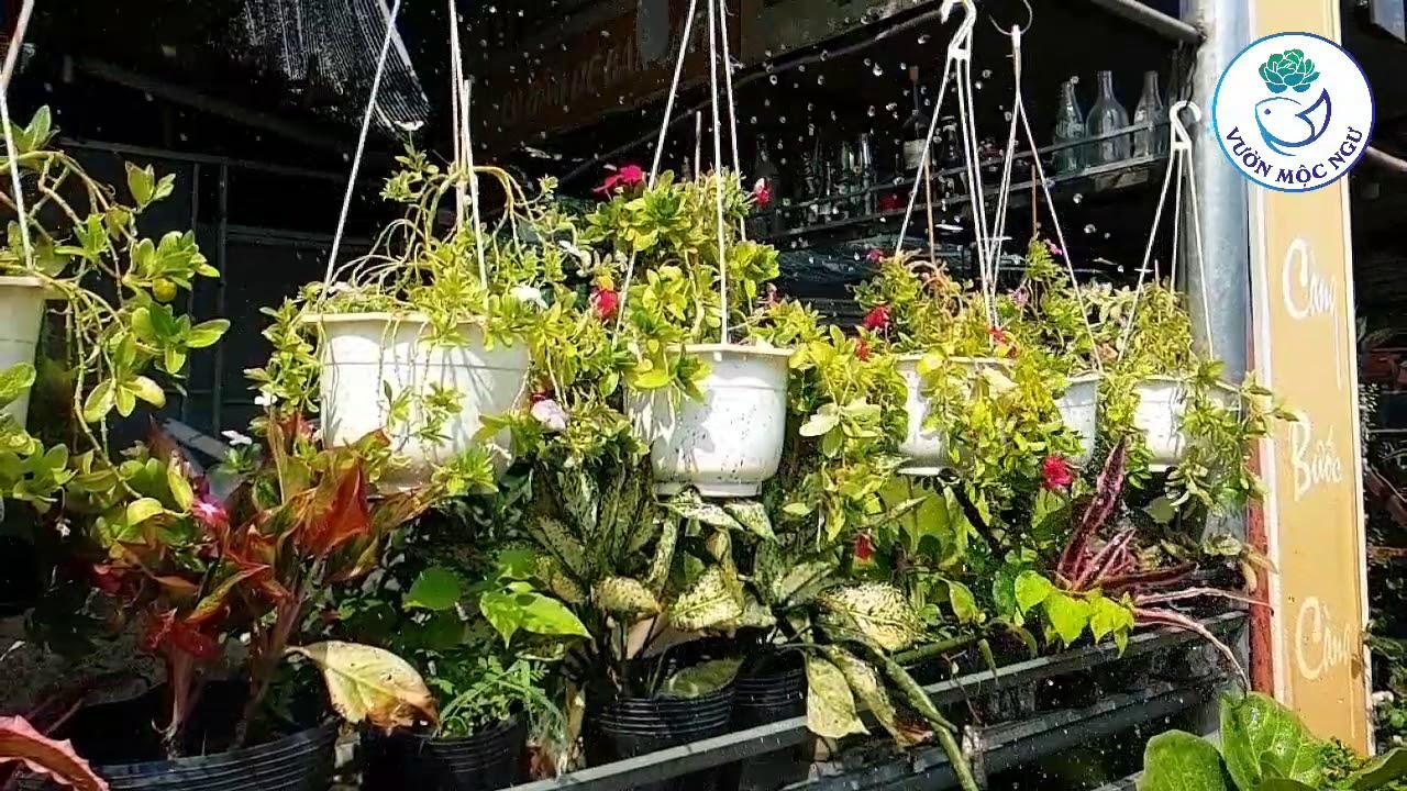 Chậu đất nung trồng sen đá |Vườn Mộc Ngư|