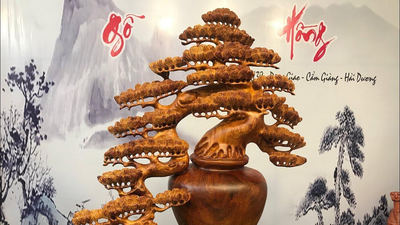 Chậu cây Tùng bonsai dáng Thác đổ CÂY CẢNH ĐẸP