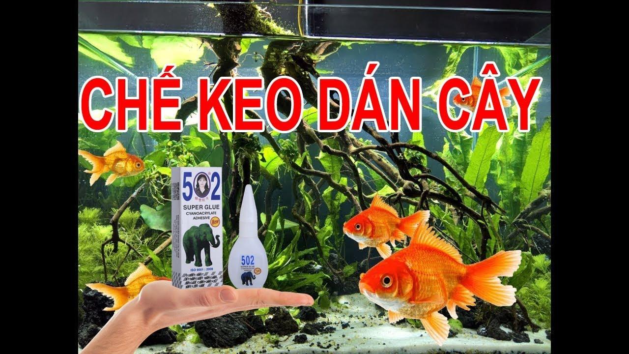 Chế keo dán cây thủy sinh, bán cạn nhanh hơn, dễ hơn | Diy Super Glue for aquarium, paludarium