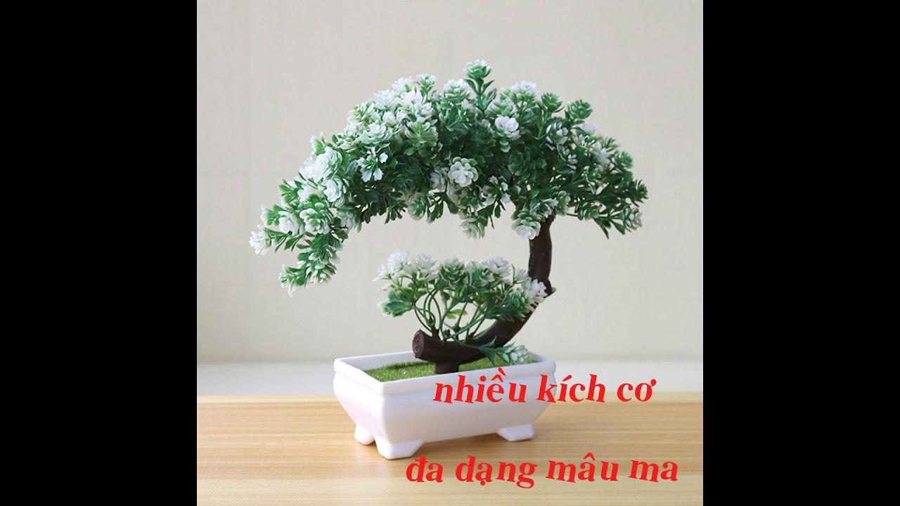 Chuyên cung cấp chậu cây cảnh ở An Giang/0938281553