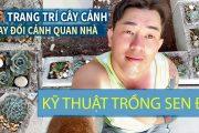 Cuộc Sống Ở Mỹ . Trồng và Chăm Sóc Sen Đá. Vườn người Việt ở Mỹ. Trồng cây trang trí nhà đẹp