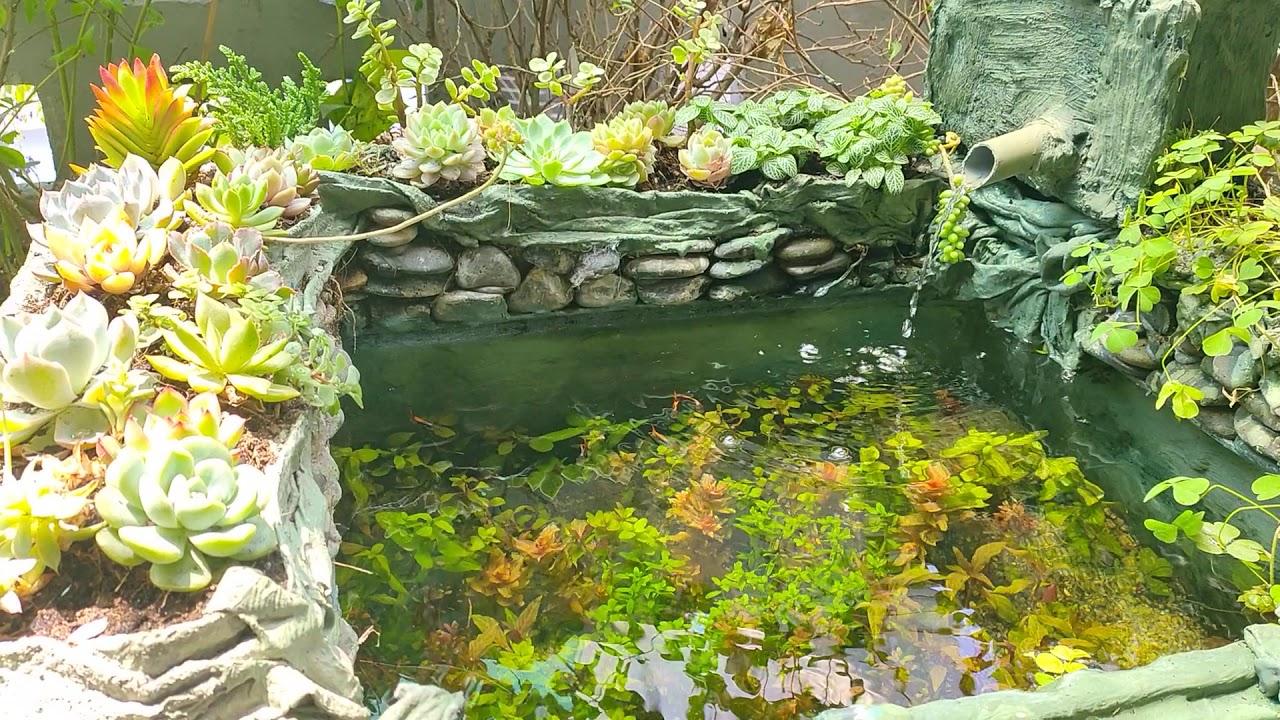 DIY BEAUTIFUL : dùng đất trồng cây thủy sinh , hồ đã ổn định