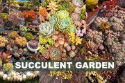 Dream garden for succulent lovers| Vườn sen đá trong mơ | 多肉植物 | 다육이들