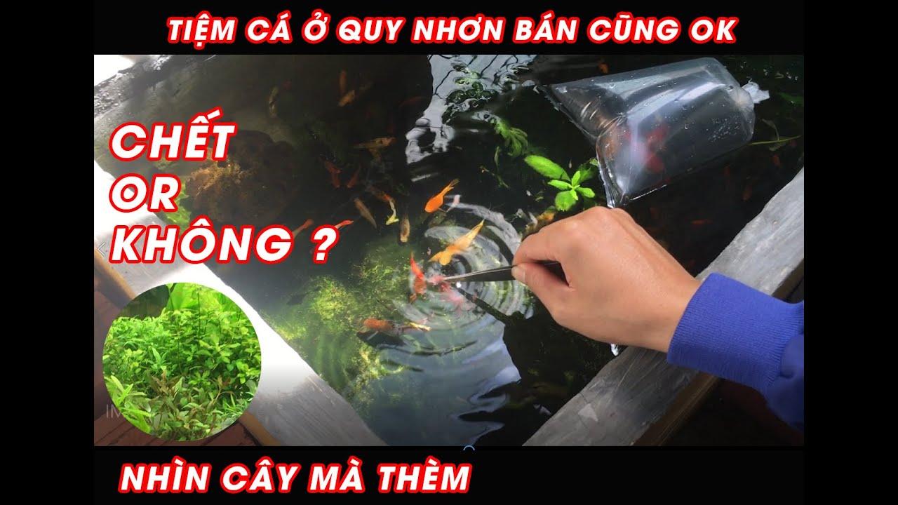 Fish Tank-Đi muaThêm Cá Vàng - Và dự định  dọn dẹp cây