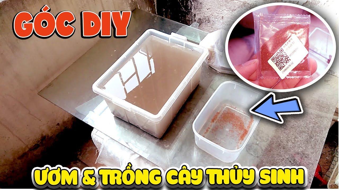 Góc DIY -Thử ươm trồng cây thủy sinh trong bể tự chế tập 1 ( Setup Aquarium DIY ) | Văn Hóng