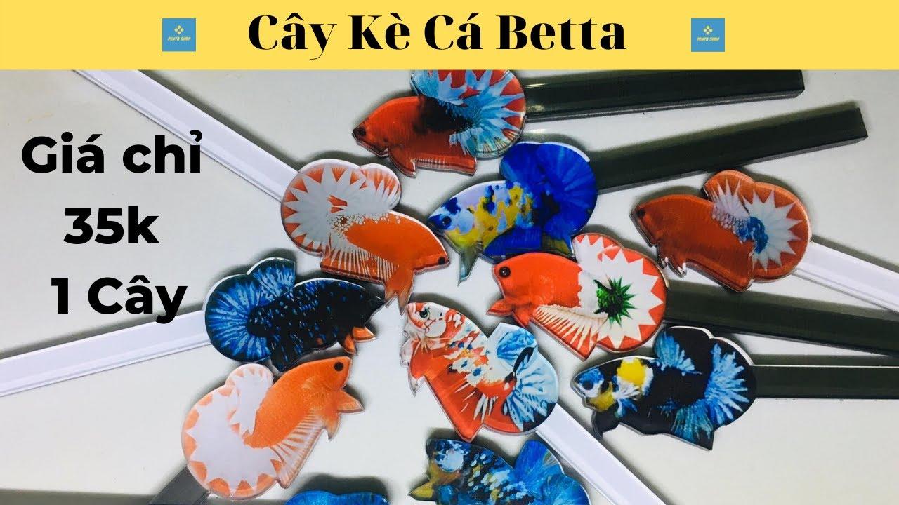 Giới Thiệu Phụ Kiện Mới Cây Kè Cá Betta
