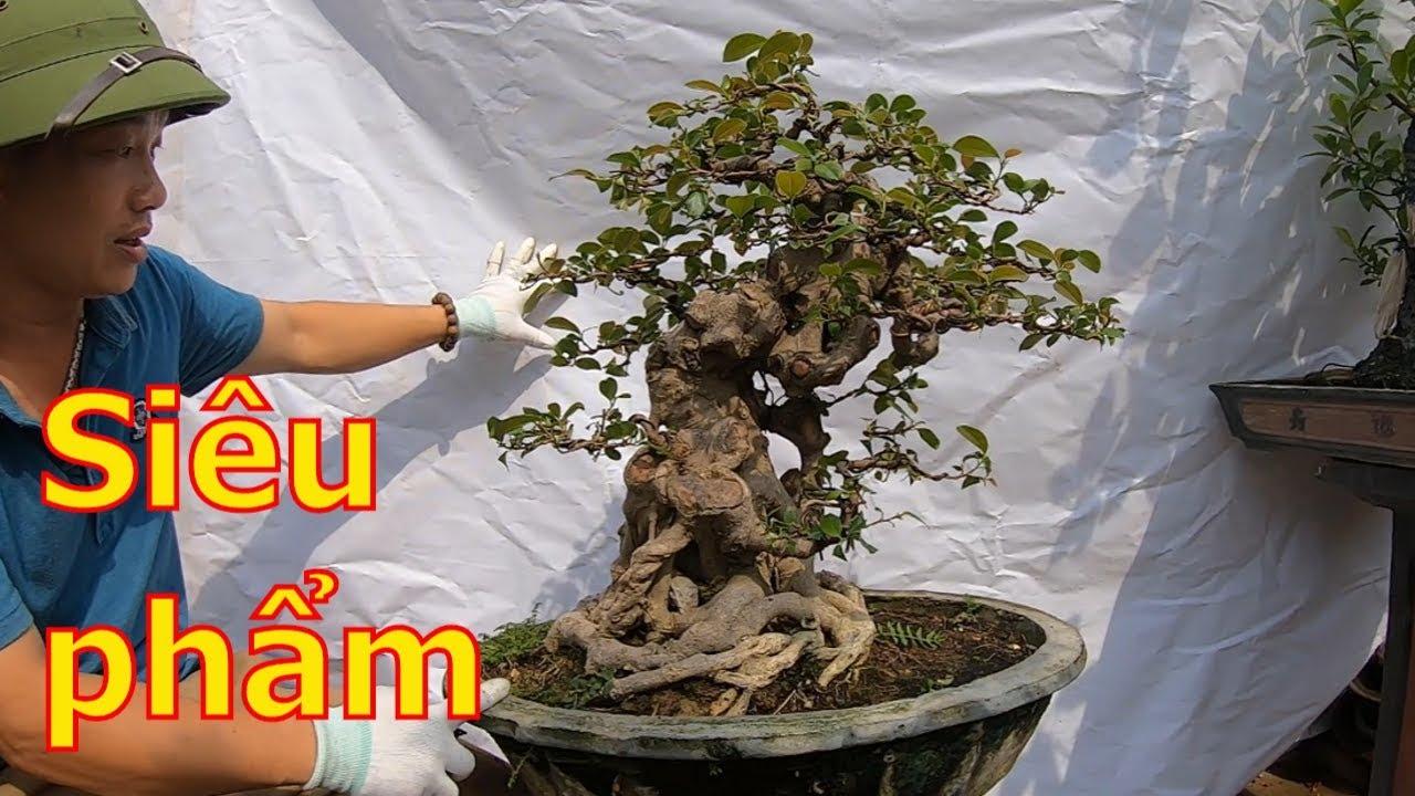 Giới thiệu lô siêu phẩm bonsai chất cốt chậu già cổ-BShp(A Đại 0967828345)