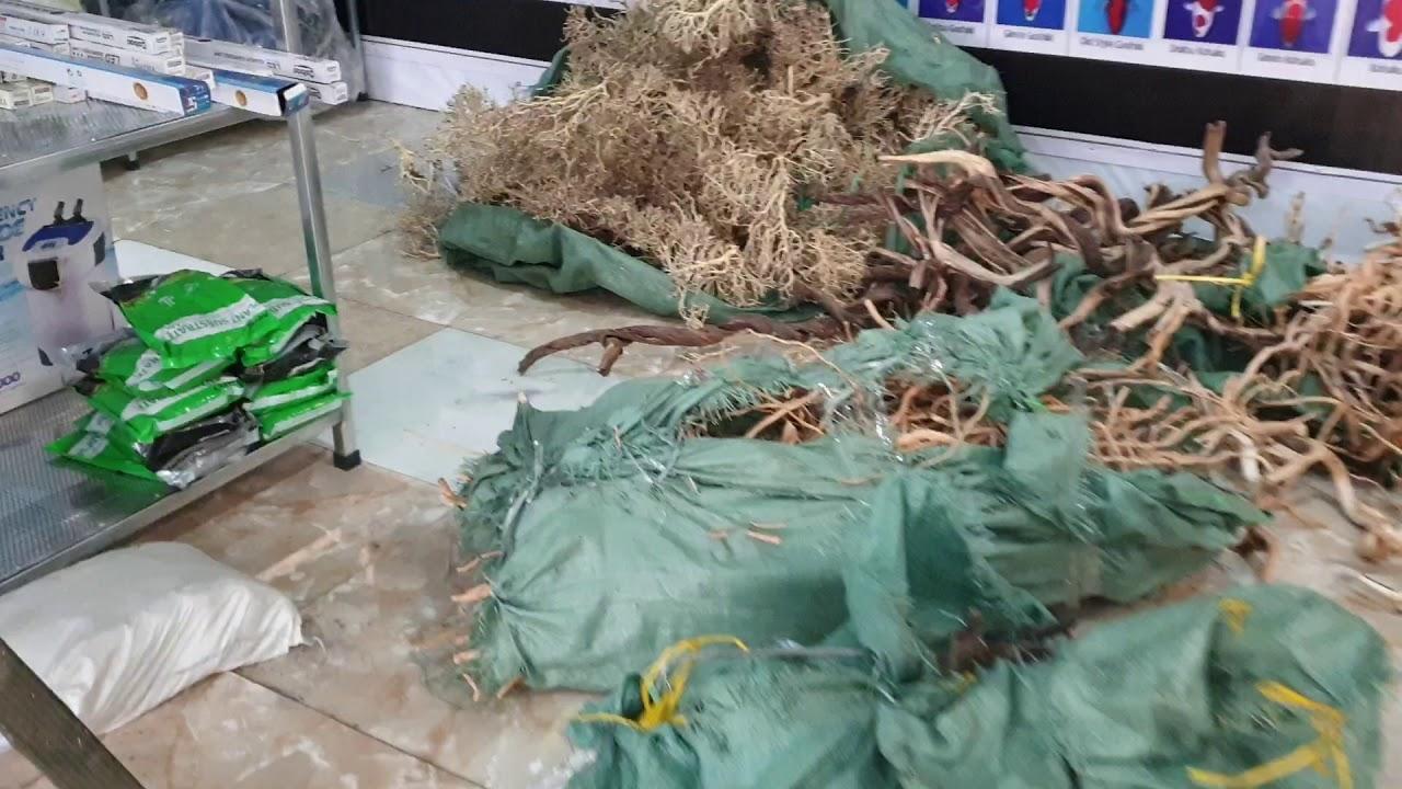 Hàng nóng đã cập bến rồi cả nhà ơi... Các loại cây thủy sinh và Lũa đẹp đã có mặt tại Trung Nguyên