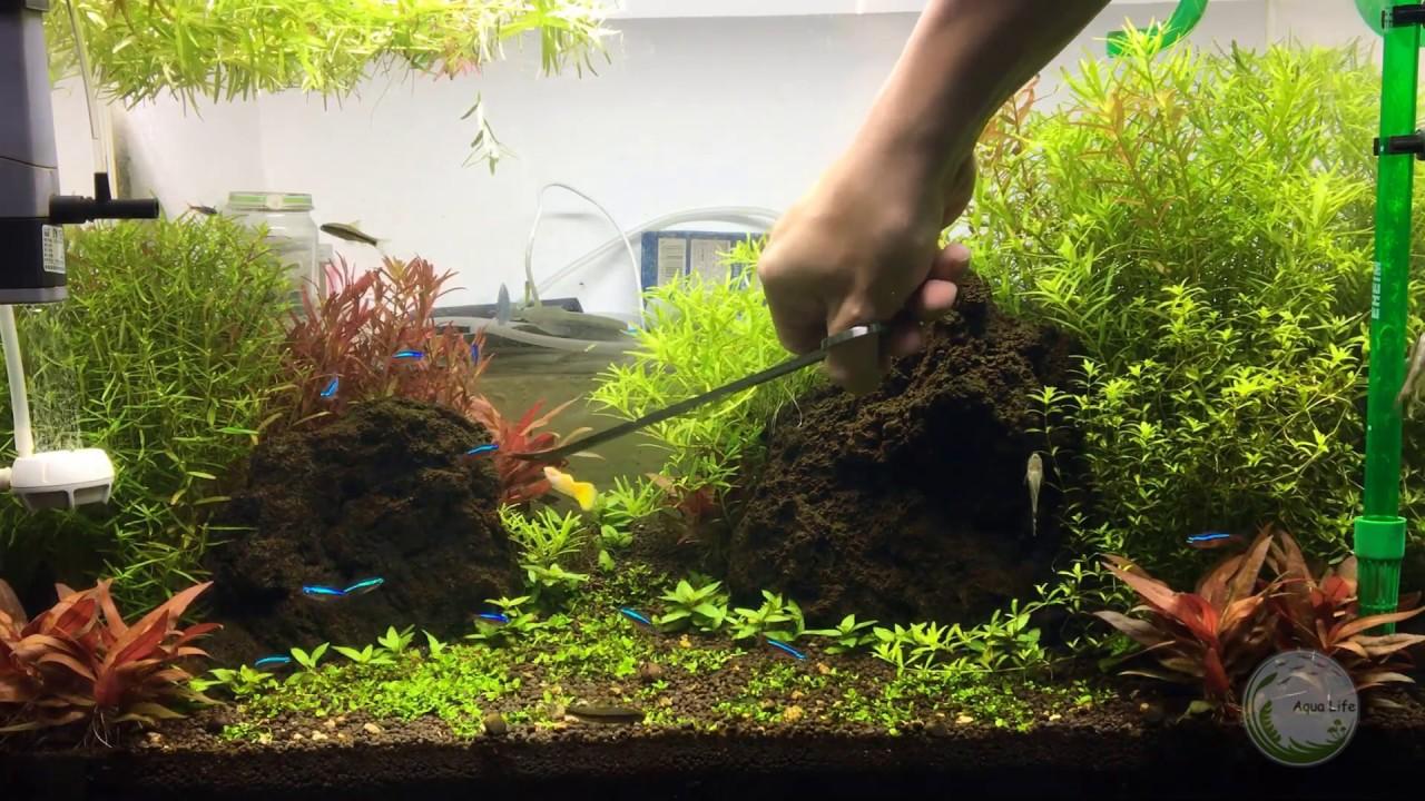 Hướng dẫn cắt tỉa cây thủy sinh cắt cắm