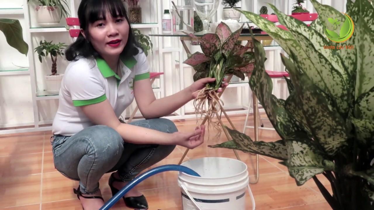 Hướng dẫn cách trồng cây thủy sinh để bàn đẹp đúng cách đơn giản, dễ thực hiện