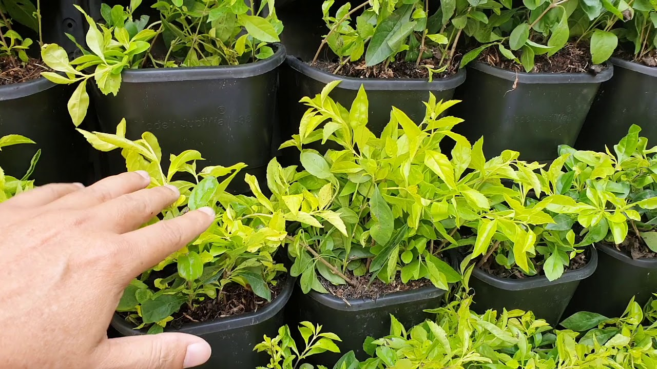 Hướng dẫn cách trồng tường cây xanh cho sân vườn, vách biệt thự hay ban công căn hộ