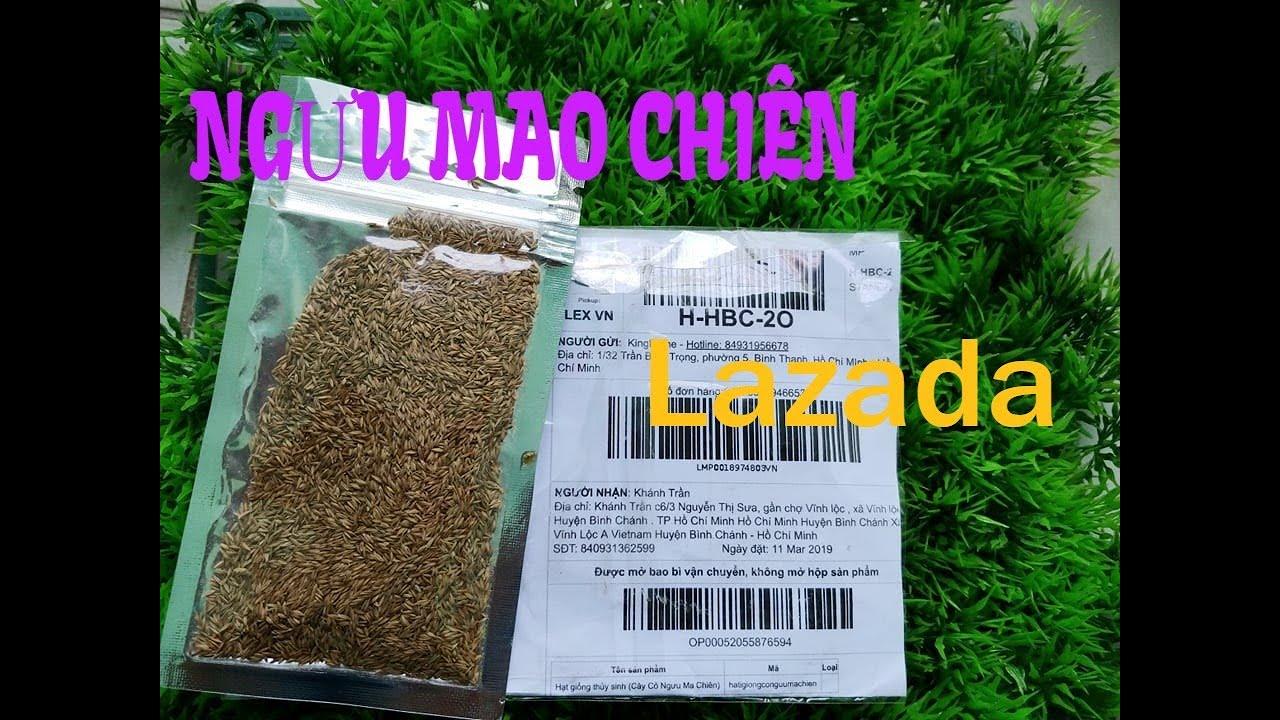 Hướng dẫn gieo hạt NGƯU MAO CHIÊN mua LAZADA như thế nào/ cây thuỷ sinh
