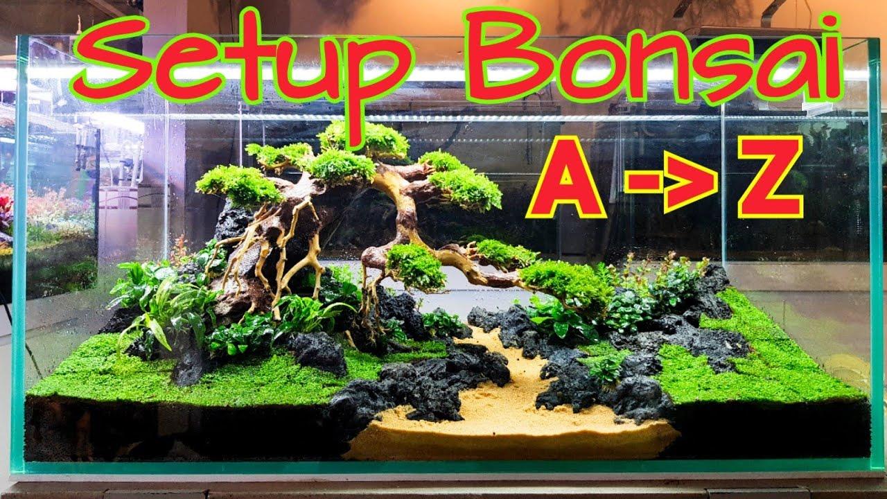Hướng dẫn làm hồ thủy sinh bonsai đúng kỹ thuật