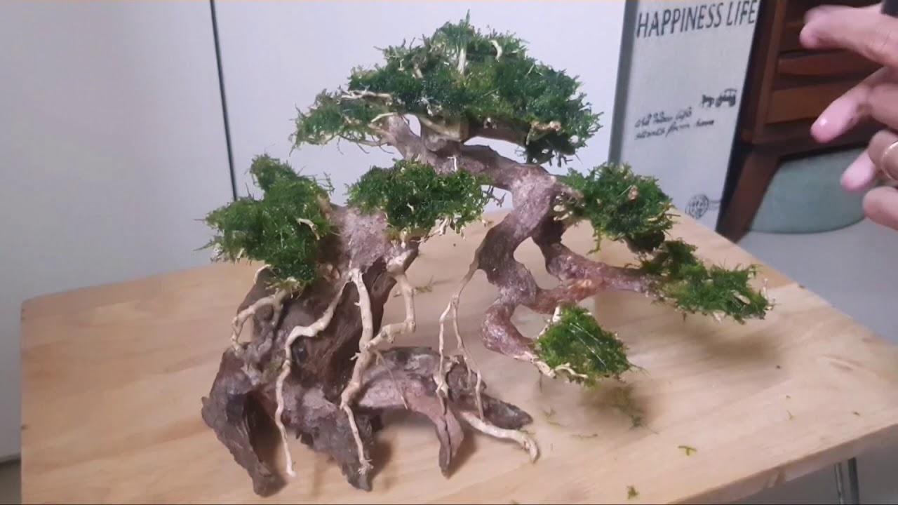 Hướng dẫn làm hồ thủy sinh bonsai - hồ 60cm