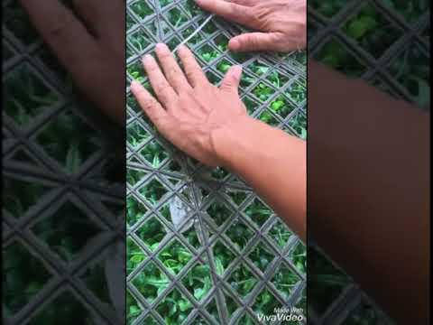Hướng dẫn thi công cỏ treo tường p1
