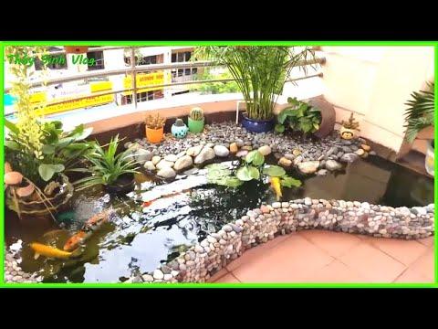 Hồ Cá Koi Tiểu Cảnh Sân Vườn Nhỏ Đẹp thích hợp mọi không gian nhà hiện đại
