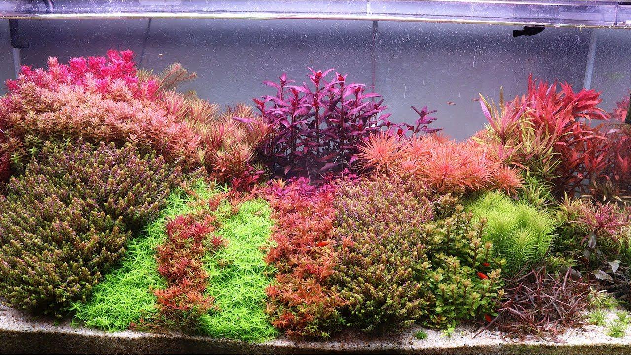 Hồ Thủy Sình  Hà Lan 1m2x60x60 sau 4 Tuần Setup - Dutch Aquarium