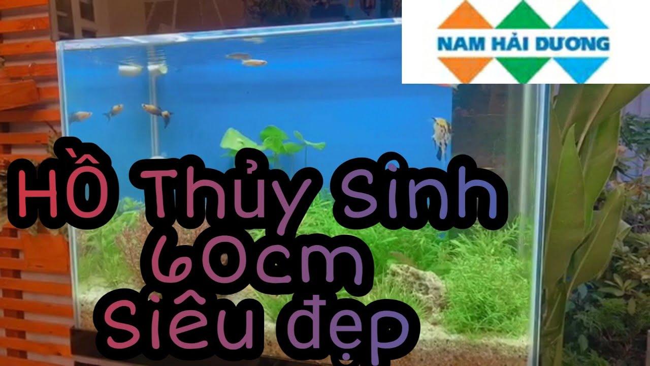 Hồ Thủy Sinh 60cm setup ở Quận Bình Tân   Hồ Cá Nam Hải Dương.