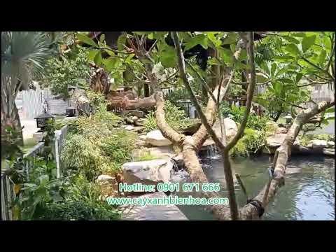 Hồ cá koi đẹp 0901 671 666
