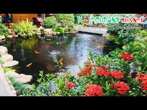Hồ cá koi đẹp tiểu cảnh sân vườn | Beautiful Backyard Fish Pond | Koi Fish Pond Chanel