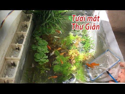 [Hồ cá thùng xốp] Foam tank aquarium Hướng dẫn trồng cây thủy sinh, thả cá