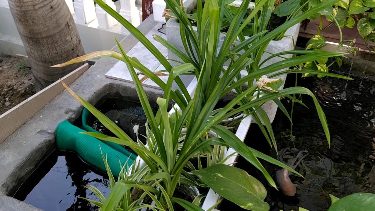 Hồ koi mini và giàn cây mới trồng