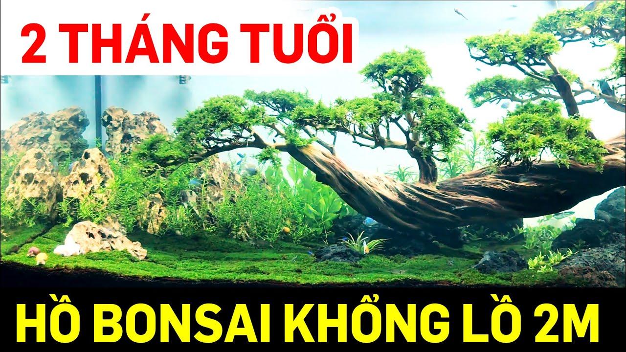 Hồ thủy sinh bonsai khổng lồ 2m phát triển như thế nào sau 2 tháng setup - Quoidecor