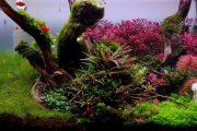 Hồ thủy sinh này rất Chill - cây siêu đỏ!