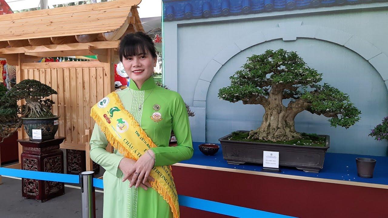 HV 490.nhiều cây bonsai nghệ thuật khu thương mại đẹp không khác gì cây triển lãm