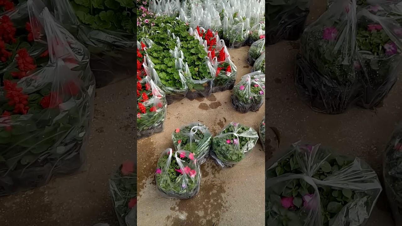 Hoa đẹp  phục vụ  tết  2020.lan rừng, các loại cây cảnh mini, chậu  hoa ,