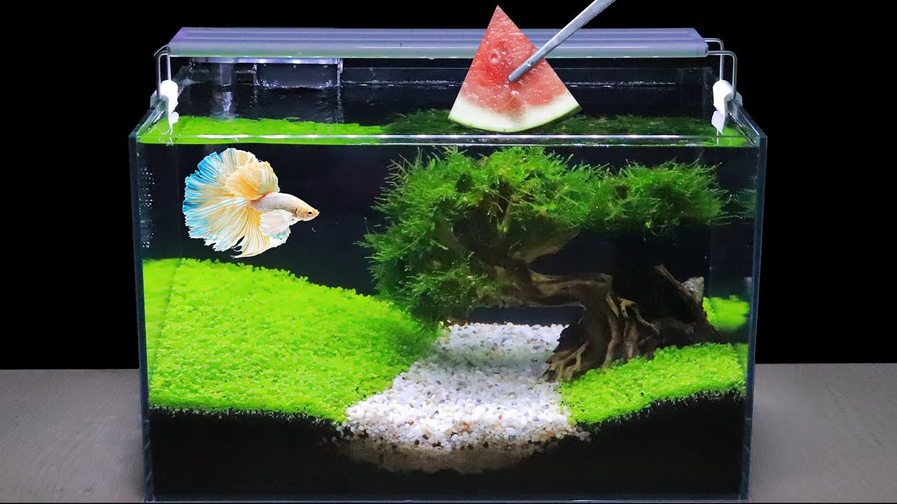 How To Grow Aquatic Plants in Aquarium (2 Months Update) Amazing Diy Aquascape For Betta Fish No Co2