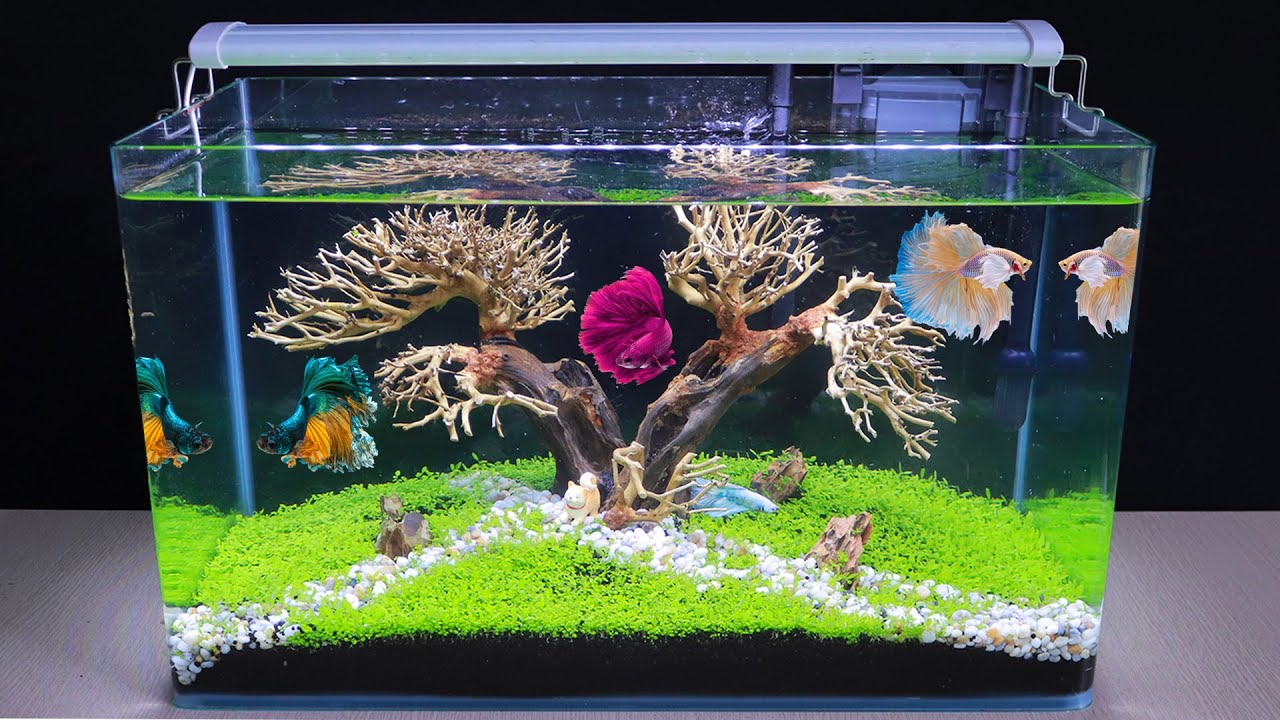 How To Make Bonsai Aquatic Planted Aquarium | DIY Aquascape No Co2 For Betta Fish Tank