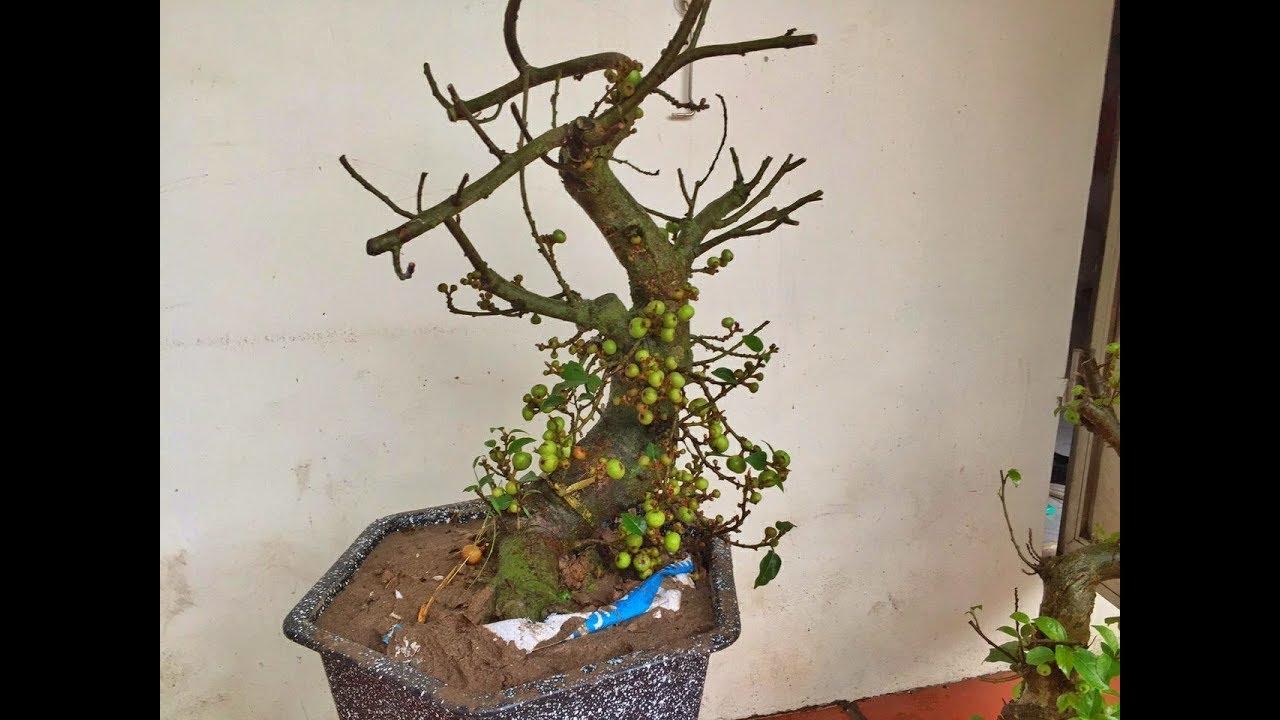 Kỹ thuật trồng cây mới bứng vào chậu!