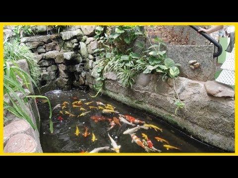 Khám Phá Quán Cà Phê Sân Vườn Hồ Cá Koi Tuyệt Đẹp View Nhìn Ra Biển