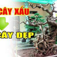 Làm cây xấu để ra cây đẹp khó hay dễ, xem video biết liền
