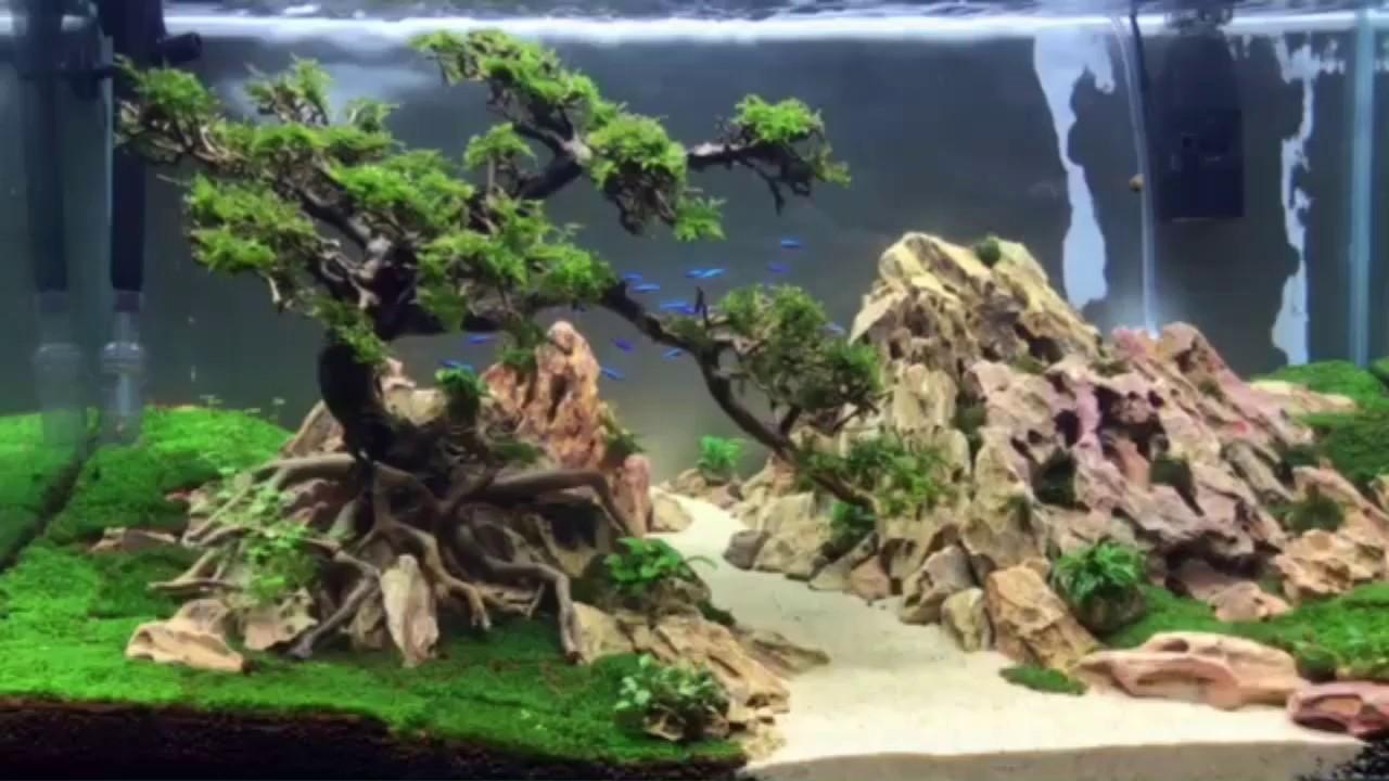 Layout thủy sinh bonsai bên dòng suối. Hồ 1 tuần tuổi. 90x50x50. A bonsai by the creek. 0932675175.