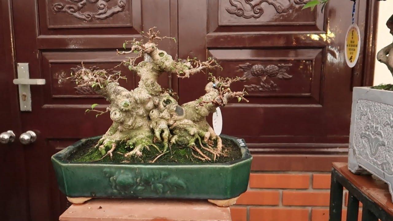 Loạt cây bonsai mini đẹp mang tính nghệ thuật cao
