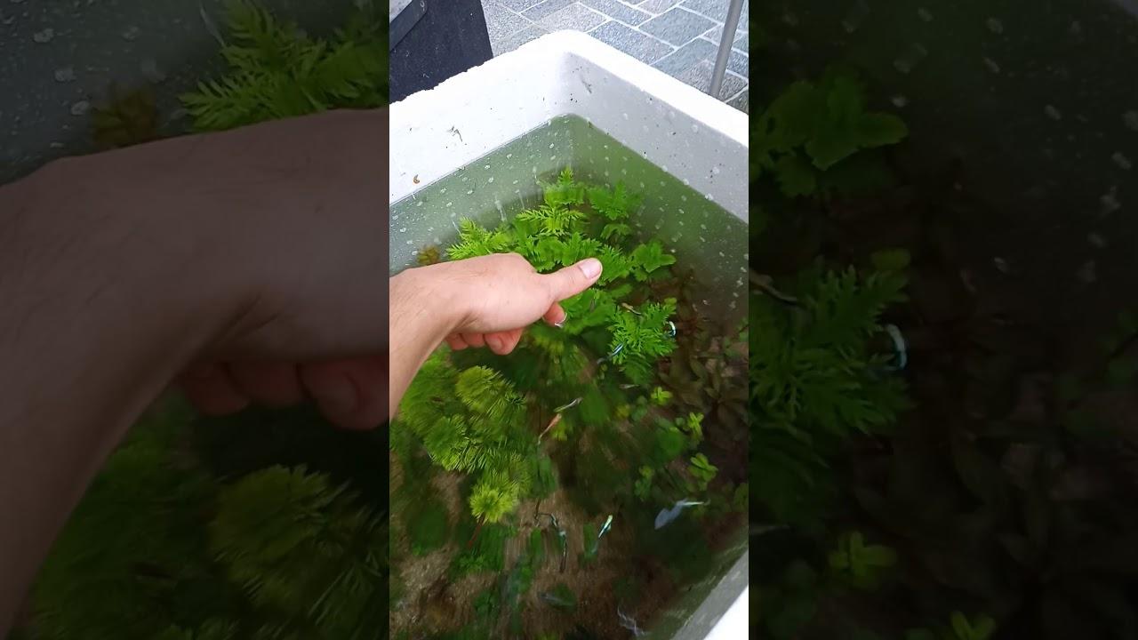Mô hình cây thủy sinh tại quán khoảnh khắc