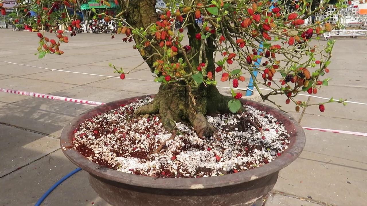Môt số cây cảnh đẹp Bonsai đẹp trong khu sinh vât cảnh
