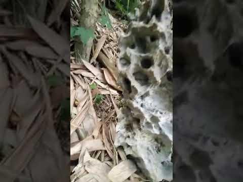 Mẫu đá cổ đẹp với góc cạnh tự nhiên tạo non bộ