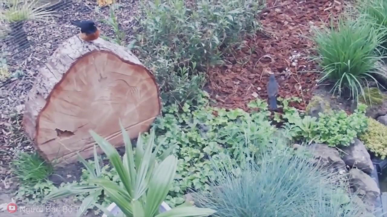 Một Vườn Chim Tiểu Cảnh sân vườn, Chim Sinh sản _Birds Garden