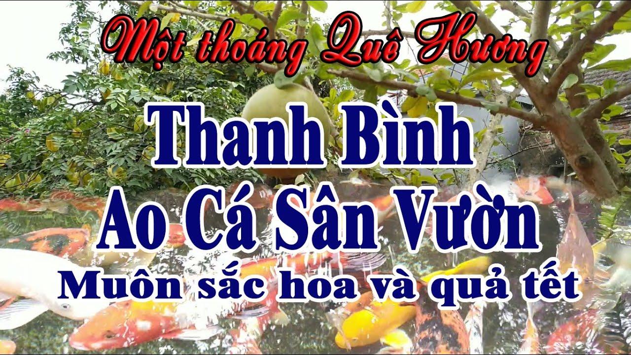 Một thoáng quê hương ao cá sân vườn đẹp nhất quê hương Việt Nam