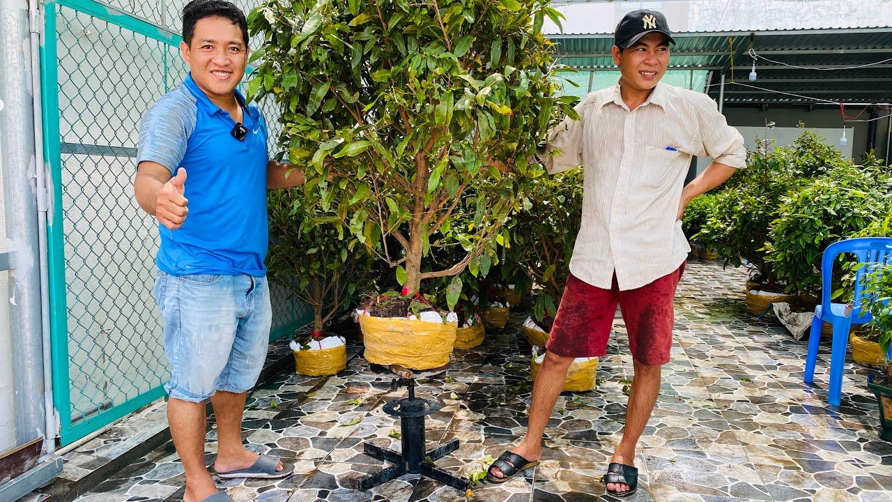 MAI GIẢO THỦ ĐỨC GIÁ RẺ ngày 18/5/2020 ?0917 359 719 A TÁM ? bonsai can tho