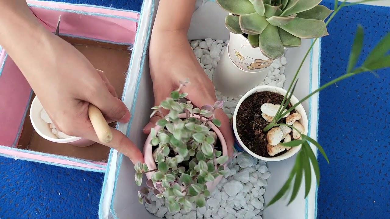 Mix những chậu sen đá mini cực xinh cực đơn giản