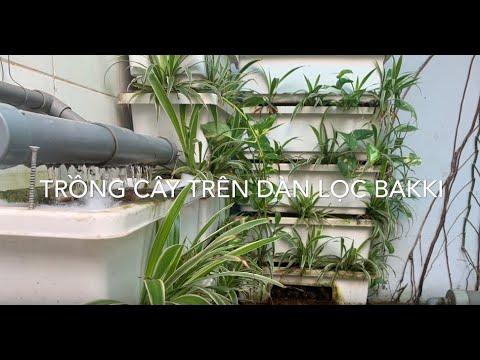 Nên trồng cây gì vào dàn lọc Bakki