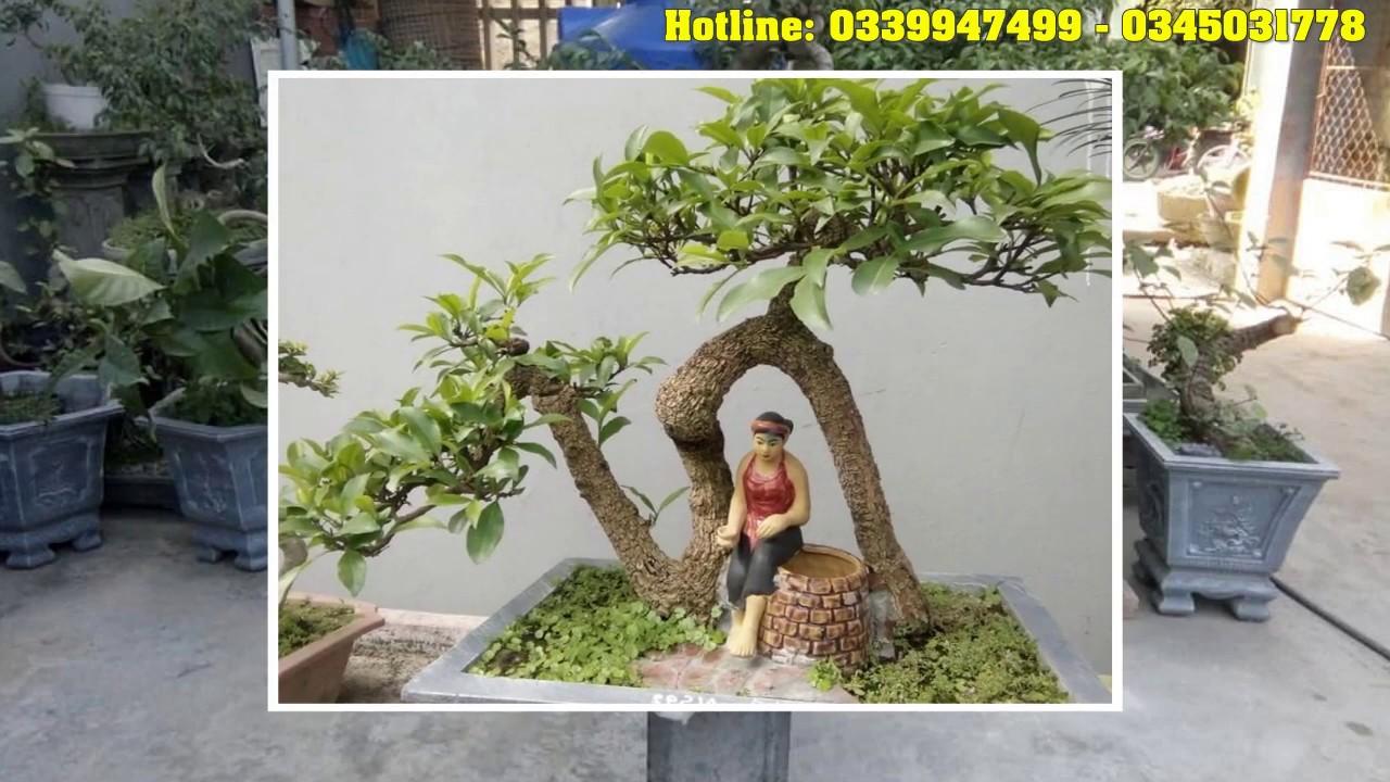 NHÀ VƯỜN TRẦN CHÌ - 0339947499 - 0345031778 cung cấp cây cảnh bonsai chậu cảnh tại bắc ninh