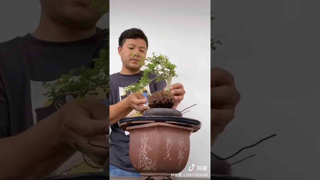 NSB [S.T]: Cách Vào Chậu Cây Bonsai Mini.