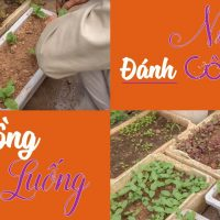 Ngày 35 - Đánh Cây Con Trồng Ra Luống - Trồng Rau Tại Nhà  Trồng Rau Sân Thượng  CAYCANHCHOHANG.com 