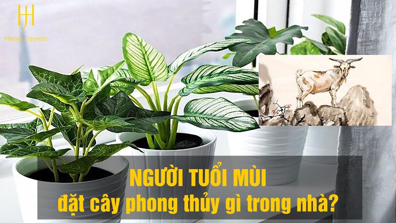 Người tuổi MÙI nên trồng cây phong thủy gì trong nhà để TÀI LỘC, MAY MẮN quanh năm