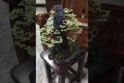 Nghệ thuật làm bonsai từ dây đồng